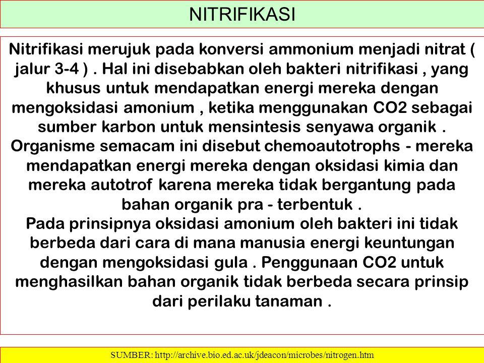 SUMBER: http://archive.bio.ed.ac.uk/jdeacon/microbes/nitrogen.htm NITRIFIKASI Nitrifikasi merujuk pada konversi ammonium menjadi nitrat ( jalur 3-4 ).