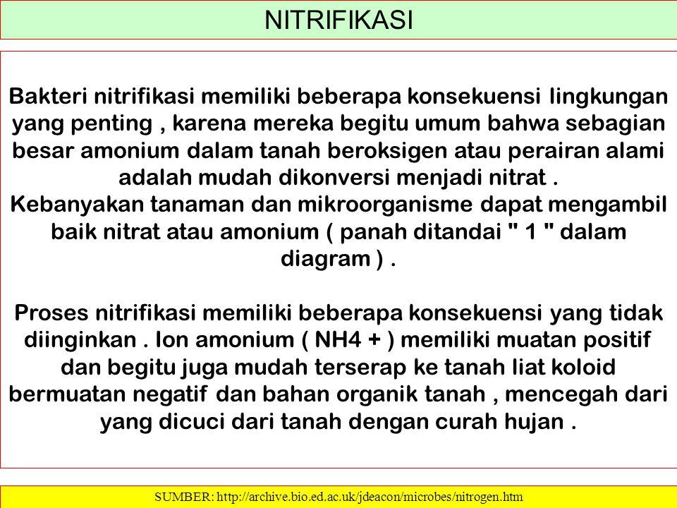 SUMBER: http://archive.bio.ed.ac.uk/jdeacon/microbes/nitrogen.htm NITRIFIKASI Bakteri nitrifikasi memiliki beberapa konsekuensi lingkungan yang pentin