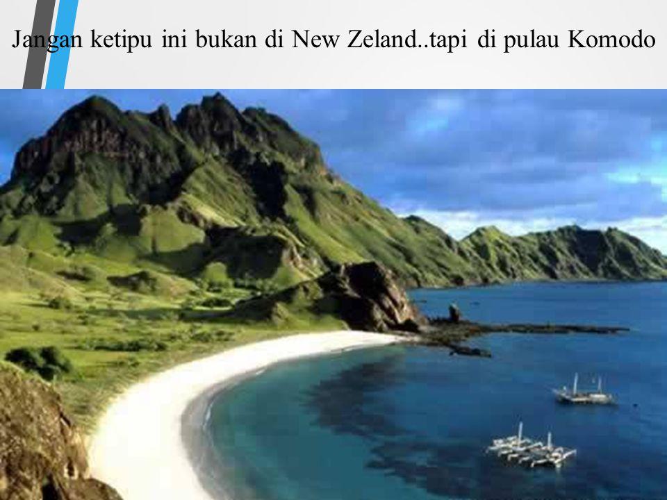 Jangan ketipu ini bukan di New Zeland..tapi di pulau Komodo