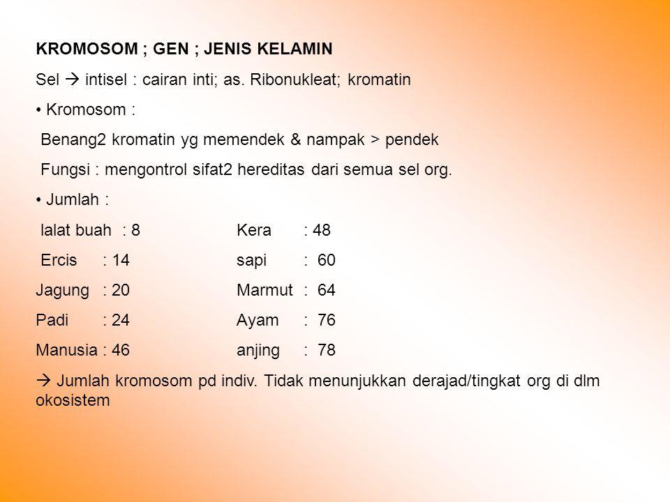 KROMOSOM ; GEN ; JENIS KELAMIN Sel  intisel : cairan inti; as.