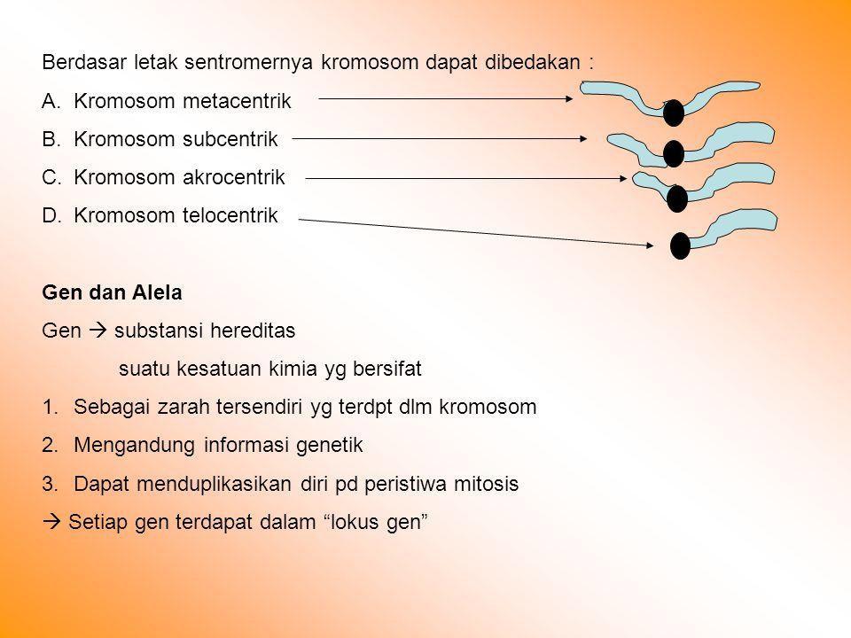 Berdasar letak sentromernya kromosom dapat dibedakan : A.Kromosom metacentrik B.Kromosom subcentrik C.Kromosom akrocentrik D.Kromosom telocentrik Gen dan Alela Gen  substansi hereditas suatu kesatuan kimia yg bersifat 1.Sebagai zarah tersendiri yg terdpt dlm kromosom 2.Mengandung informasi genetik 3.Dapat menduplikasikan diri pd peristiwa mitosis  Setiap gen terdapat dalam lokus gen