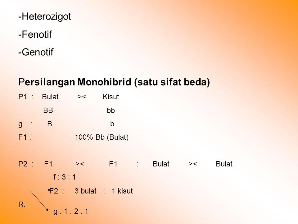 -Heterozigot -Fenotif -Genotif Persilangan Monohibrid (satu sifat beda) P1 : Bulat >< Kisut BB bb g : B b F1 : 100% Bb (Bulat) P2 : F1 > < Bulat F2 : 3 bulat : 1 kisut R.