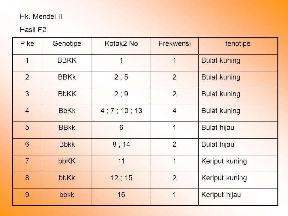 Hk. Mendel II Hasil F2 P keGenotipeKotak2 NoFrekwensifenotipe 1BBKK11Bulat kuning 2BBKk2 ; 52Bulat kuning 3BbKK2 ; 92Bulat kuning 4BbKk4 ; 7 ; 10 ; 13