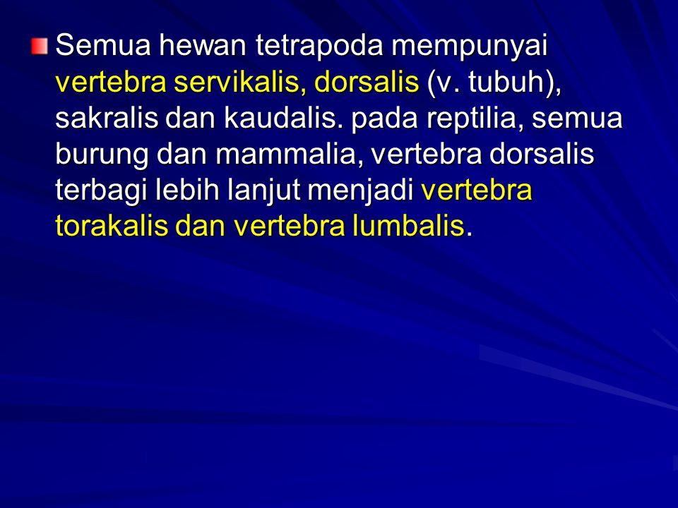 Semua hewan tetrapoda mempunyai vertebra servikalis, dorsalis (v. tubuh), sakralis dan kaudalis. pada reptilia, semua burung dan mammalia, vertebra do