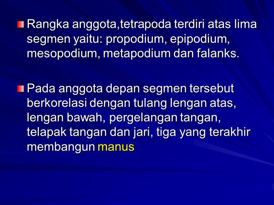 Rangka anggota,tetrapoda terdiri atas lima segmen yaitu: propodium, epipodium, mesopodium, metapodium dan falanks. Pada anggota depan segmen tersebut