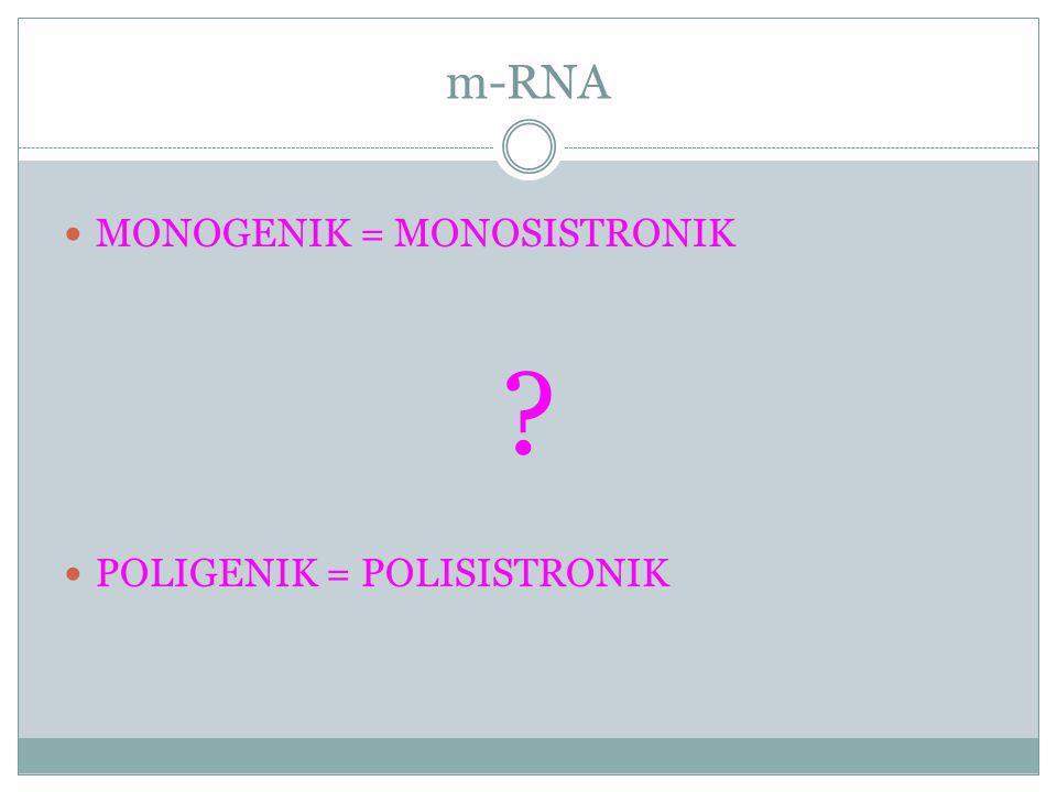 m-RNA MONOGENIK = MONOSISTRONIK ? POLIGENIK = POLISISTRONIK