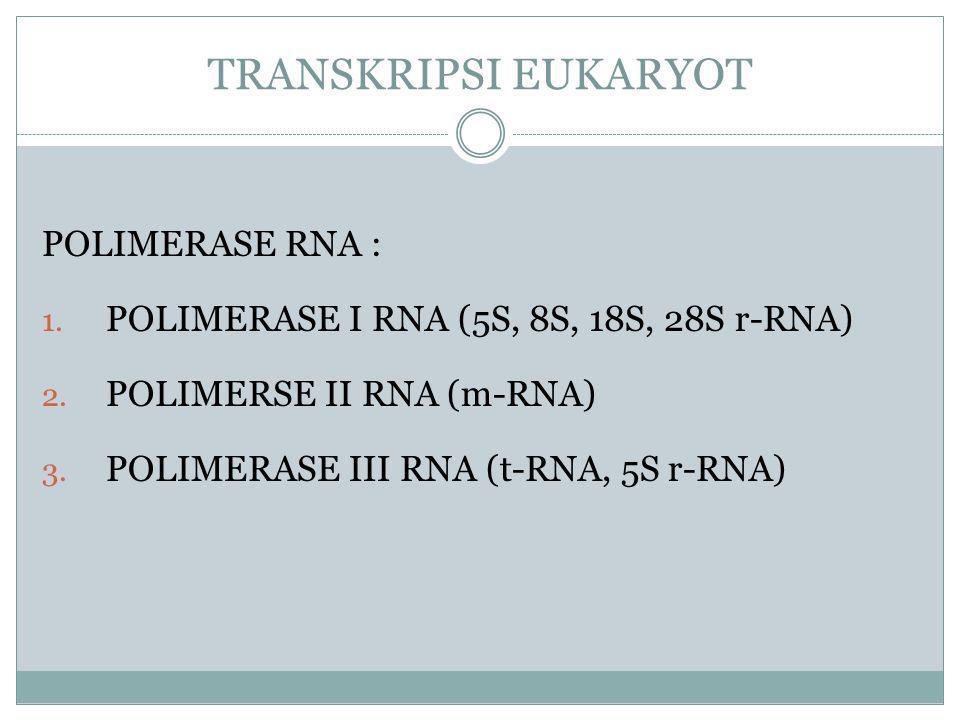 POLIMERASE RNA : 1.POLIMERASE I RNA (5S, 8S, 18S, 28S r-RNA) 2.