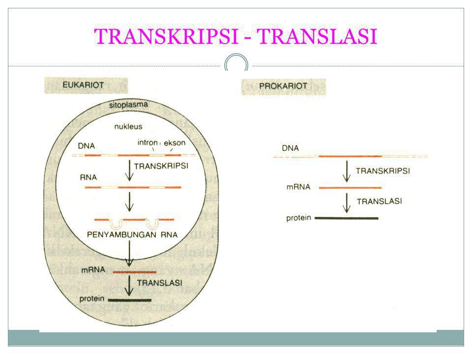 TRANSKRIPSI - TRANSLASI