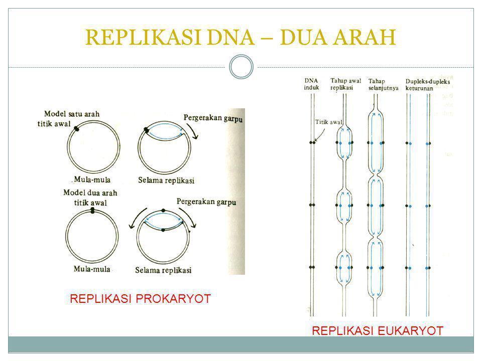 REPLIKASI DNA – DUA ARAH REPLIKASI PROKARYOT REPLIKASI EUKARYOT