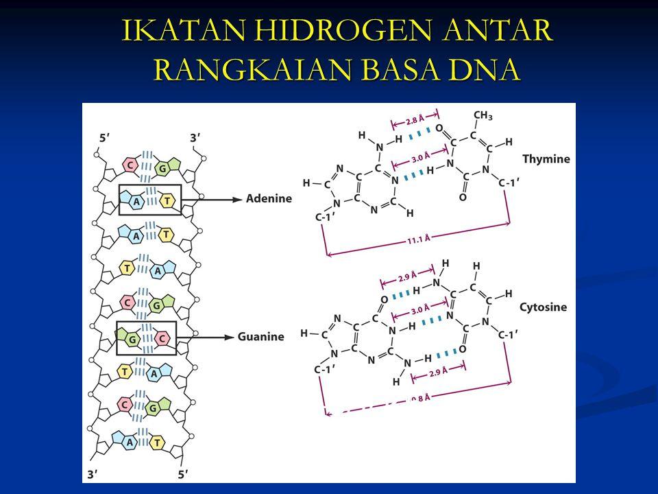 IKATAN HIDROGEN ANTAR RANGKAIAN BASA DNA Watson-Crick base pairing