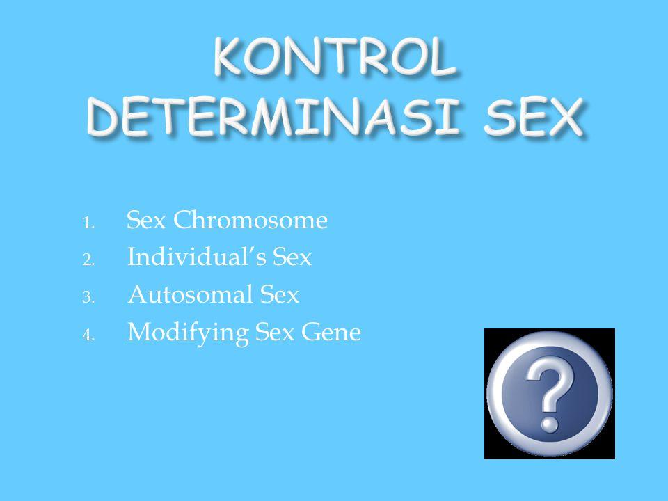1. Sex Chromosome 2. Individual's Sex 3. Autosomal Sex 4. Modifying Sex Gene