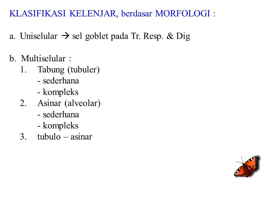KLASIFIKASI KELENJAR, berdasar MORFOLOGI : a.Uniselular  sel goblet pada Tr. Resp. & Dig b. Multiselular : 1. Tabung (tubuler) - sederhana - kompleks