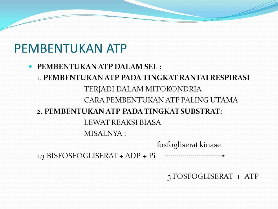 PEMBENTUKAN ATP PEMBENTUKAN ATP DALAM SEL : 1. PEMBENTUKAN ATP PADA TINGKAT RANTAI RESPIRASI TERJADI DALAM MITOKONDRIA CARA PEMBENTUKAN ATP PALING UTA