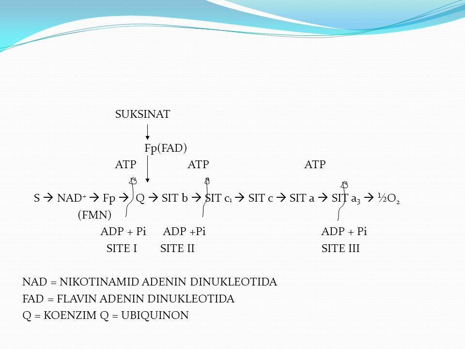 NAD +  NADH + H +  Fp  FpH 2  Q  QH 2  SISTEM SITOKROM  ½ O 2  H 2 O  ALIRAN ELEKTRON: DARI YG ELEKTRONEGATIF KE YG ELEKTROPOSITIF  SEBELUM SIT a 3 TERGOLONG DEHIDROGENASE  SIT a 3 TERGOLONG OKSIDASE, JADI DISEBUT SITOKROM OKSIDASE