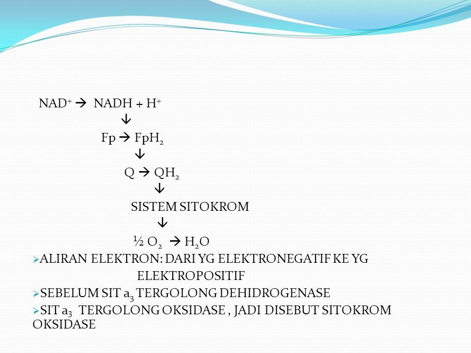 NAD +  NADH + H +  Fp  FpH 2  Q  QH 2  SISTEM SITOKROM  ½ O 2  H 2 O  ALIRAN ELEKTRON: DARI YG ELEKTRONEGATIF KE YG ELEKTROPOSITIF  SEBELUM