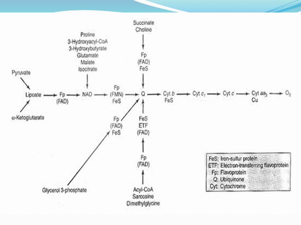 INHIBITOR RANTAI RESPIRASI SUKSINAT Fp (FAD) S  NAD +  Fp  Q  SIT b  SIT c 1  SIT c  SIT a  SIT a 3  ½O 2 (FMN) I II III INHIBITOR SISTEM RANTAI RESPIRASI ADALAH SENYAWA2 YANG MENGAKIBATKAN :- RANTAI RESPIRASI TIDAK BERJALAN - ATP TIDAK TERBENTUK