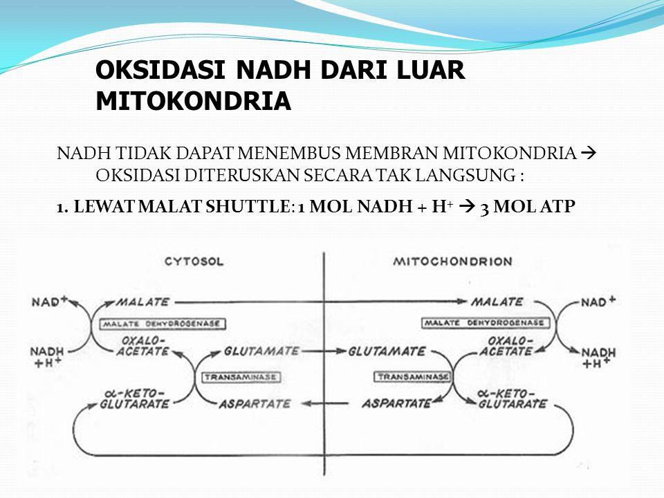 NADH TIDAK DAPAT MENEMBUS MEMBRAN MITOKONDRIA  OKSIDASI DITERUSKAN SECARA TAK LANGSUNG : 1. LEWAT MALAT SHUTTLE: 1 MOL NADH + H +  3 MOL ATP OKSIDAS