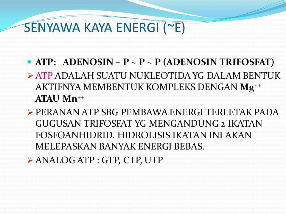 SENYAWA KAYA ENERGI (~E) ATP: ADENOSIN – P ~ P ~ P (ADENOSIN TRIFOSFAT)  ATP ADALAH SUATU NUKLEOTIDA YG DALAM BENTUK AKTIFNYA MEMBENTUK KOMPLEKS DENG