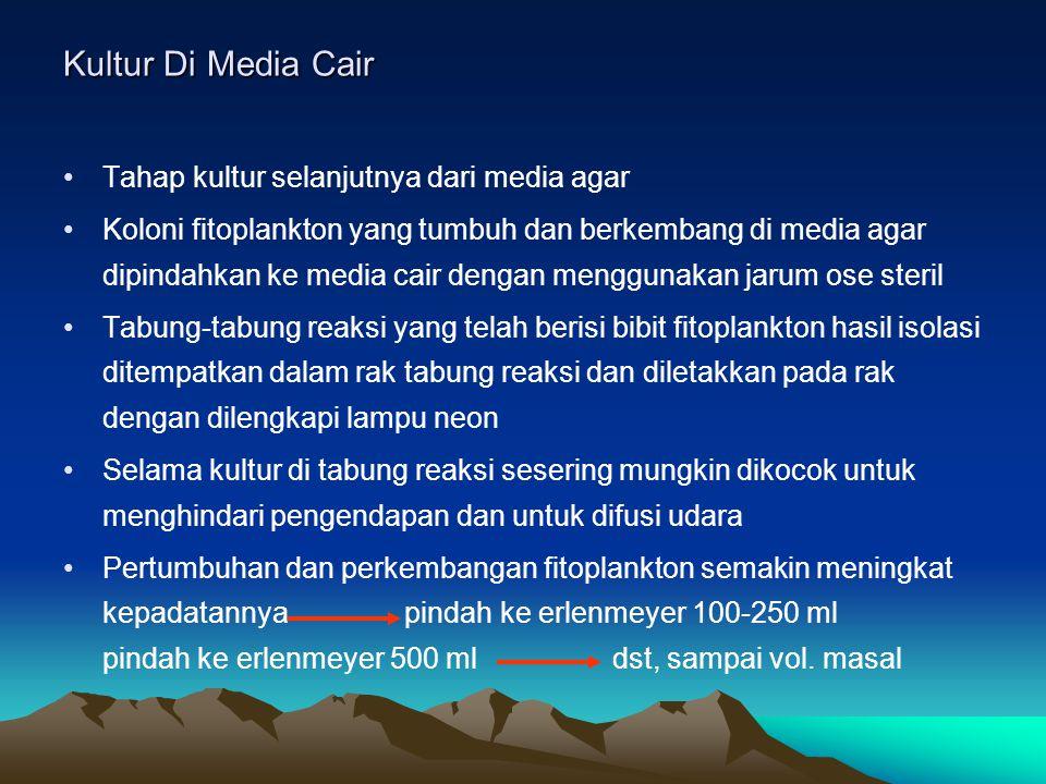 Kultur Di Media Cair Tahap kultur selanjutnya dari media agar Koloni fitoplankton yang tumbuh dan berkembang di media agar dipindahkan ke media cair d