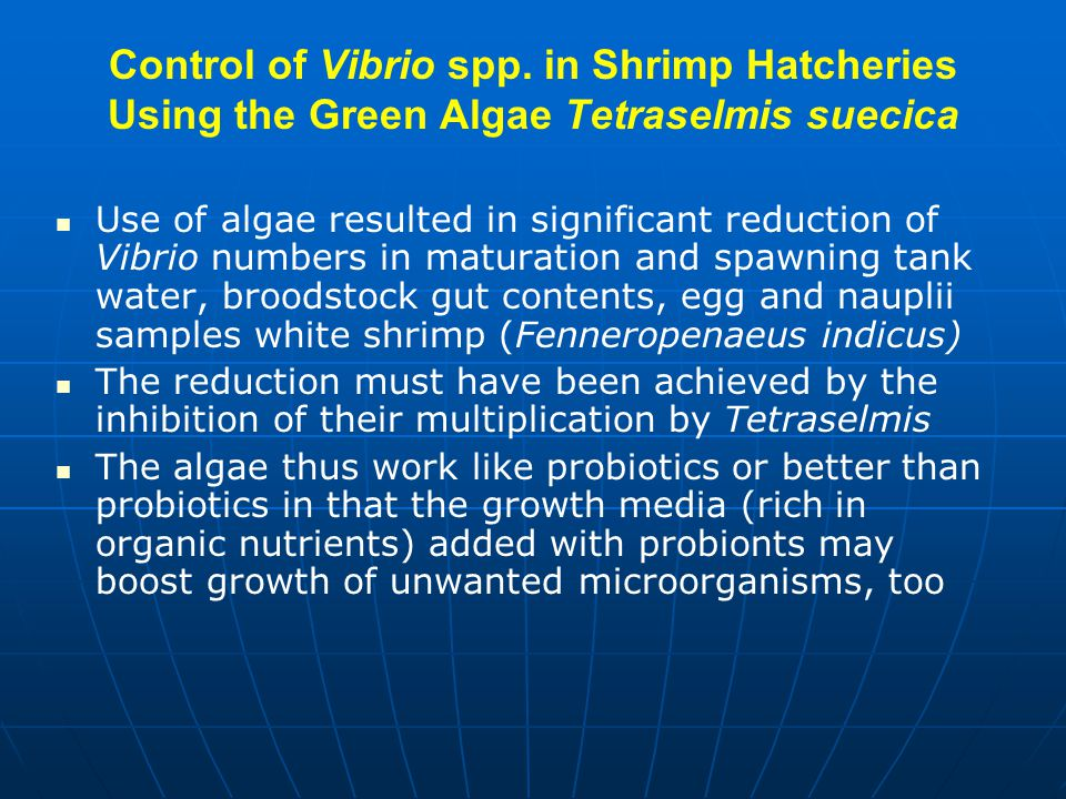 Control of Vibrio spp. in Shrimp Hatcheries Using the Green Algae Tetraselmis suecica Use of algae resulted in significant reduction of Vibrio numbers