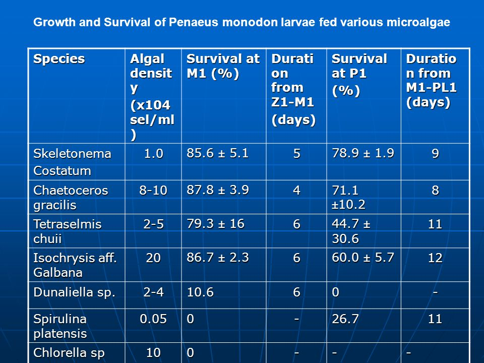 Growth and Survival of Penaeus monodon larvae fed various microalgae Species Algal densit y (x104 sel/ml ) Survival at M1 (%) Durati on from Z1-M1 (days) Survival at P1 (%) Duratio n from M1-PL1 (days) SkeletonemaCostatum1.0 85.6 ± 5.1 5 78.9 ± 1.9 9 Chaetoceros gracilis 8-10 87.8 ± 3.9 4 71.1 ±10.2 8 Tetraselmis chuii 2-5 79.3 ± 16 6 44.7 ± 30.6 11 Isochrysis aff.