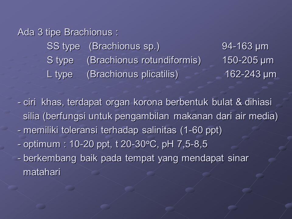 Ada 3 tipe Brachionus : SS type (Brachionus sp.)94-163 μm S type (Brachionus rotundiformis)150-205 μm L type (Brachionus plicatilis) 162-243 μm - ciri