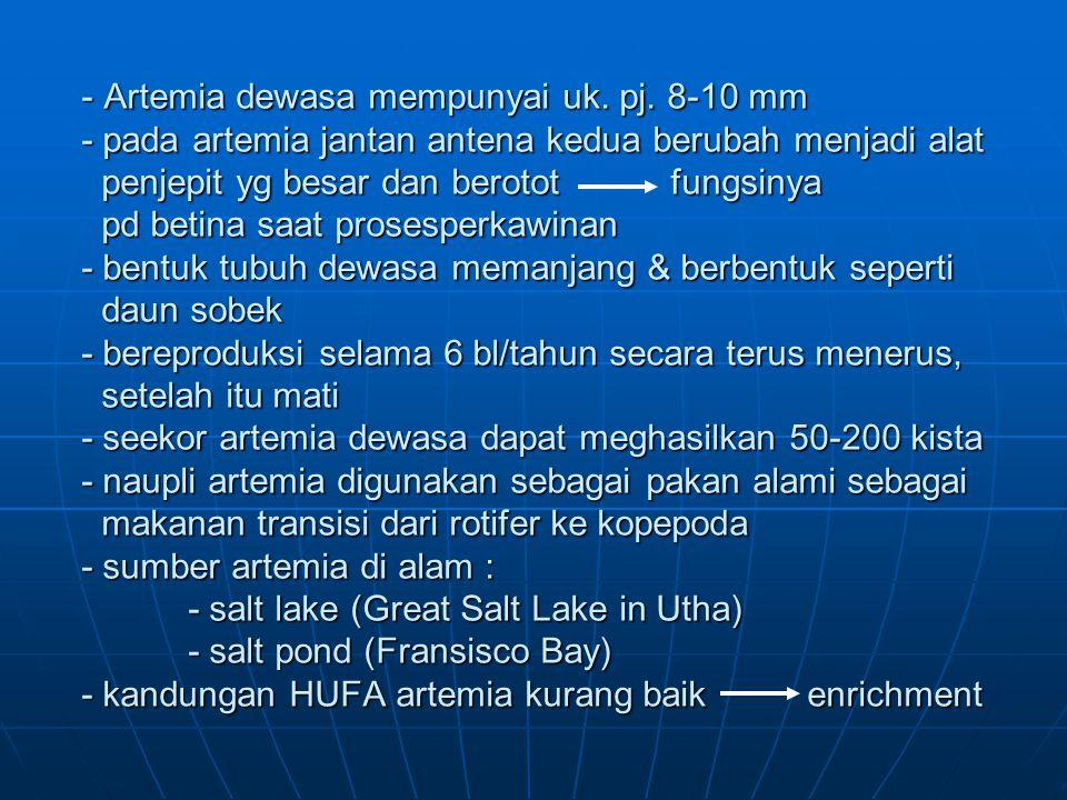 - Artemia dewasa mempunyai uk. pj. 8-10 mm - pada artemia jantan antena kedua berubah menjadi alat penjepit yg besar dan berotot fungsinya pd betina s