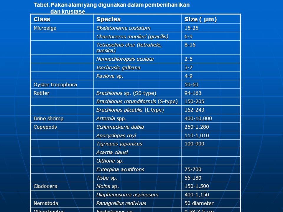 Tabel. Pakan alami yang digunakan dalam pembenihan ikan dan krustaseClassSpecies Size ( μm) Microalga Skeletonema costatum 15-25 Chaetoceros muelleri