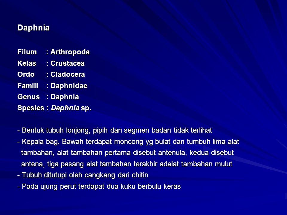 Daphnia Filum: Arthropoda Kelas: Crustacea Ordo: Cladocera Famili: Daphnidae Genus: Daphnia Spesies : Daphnia sp. - Bentuk tubuh lonjong, pipih dan se