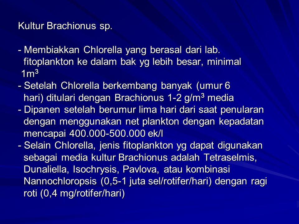 Kultur Brachionus sp. - Membiakkan Chlorella yang berasal dari lab. fitoplankton ke dalam bak yg lebih besar, minimal 1m 3 - Setelah Chlorella berkemb