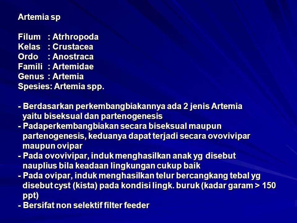 Artemia sp Filum: Atrhropoda Kelas: Crustacea Ordo: Anostraca Famili: Artemidae Genus: Artemia Spesies: Artemia spp. - Berdasarkan perkembangbiakannya