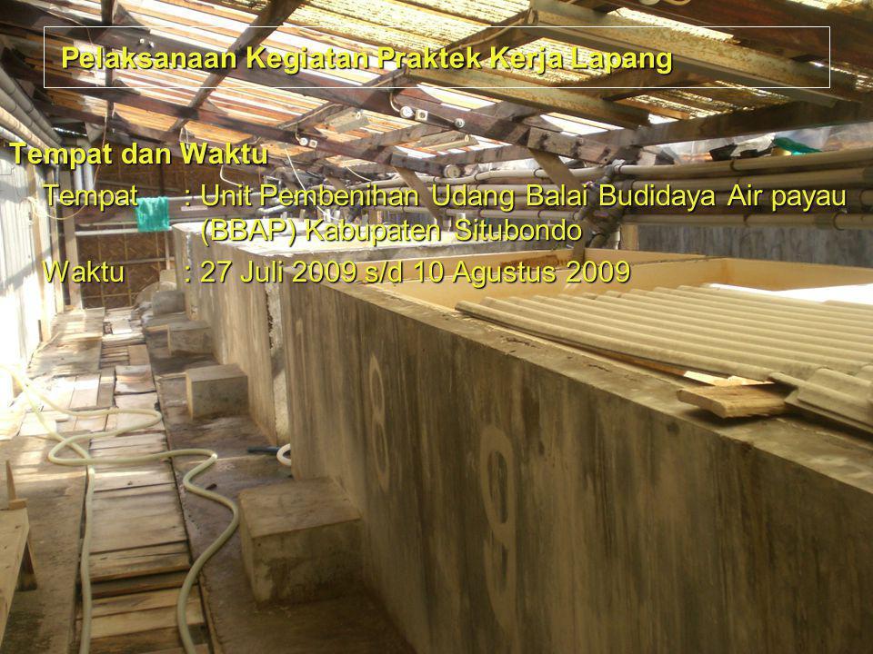 Pelaksanaan Kegiatan Praktek Kerja Lapang Pelaksanaan Kegiatan Praktek Kerja Lapang Tempat dan Waktu Tempat: Unit Pembenihan Udang Balai Budidaya Air
