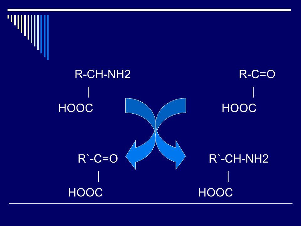 R-CH-NH2R-C=O | | HOOC R`-C=OR`-CH-NH2 | | HOOC HOOC