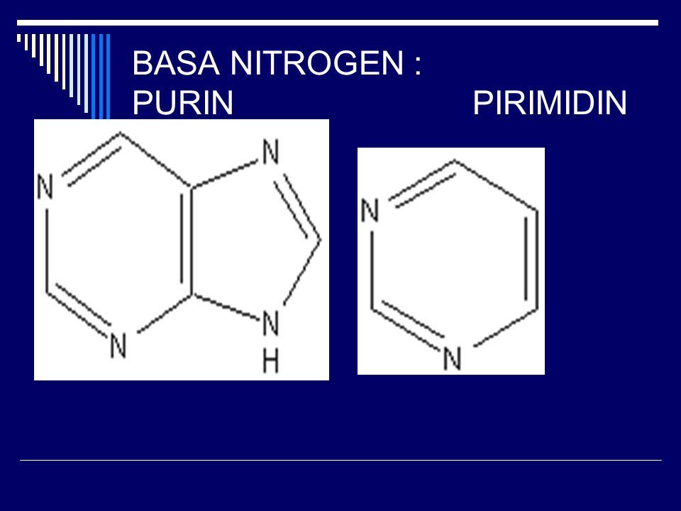BASA NITROGEN : PURINPIRIMIDIN