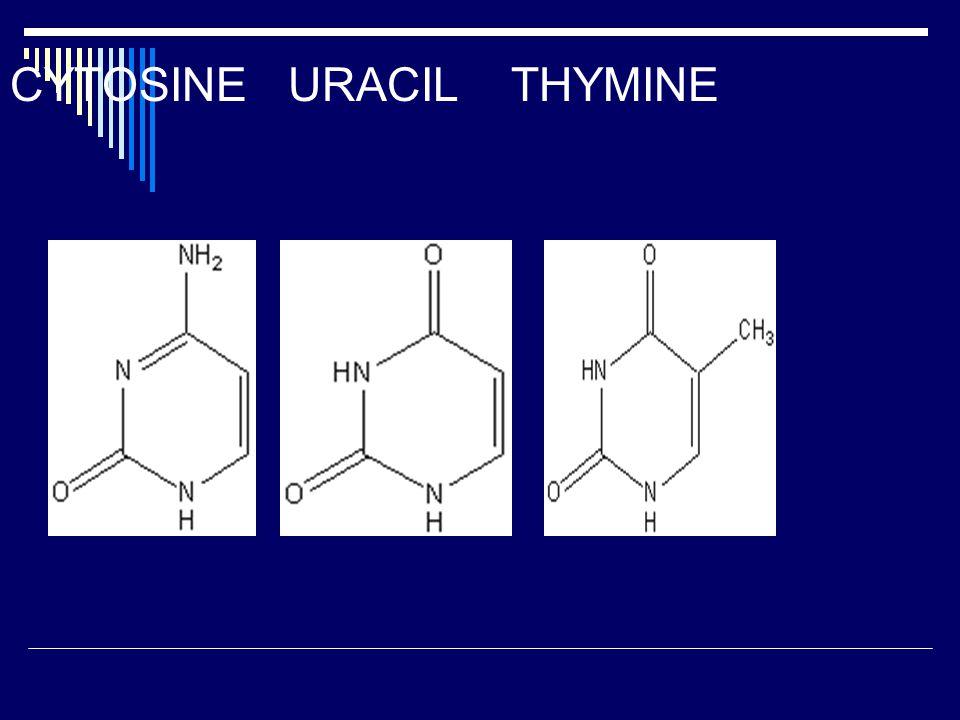 CYTOSINE URACIL THYMINE