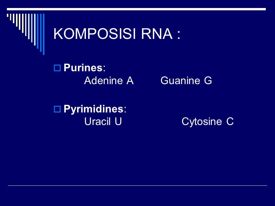 KOMPOSISI RNA :  Purines: Adenine A Guanine G  Pyrimidines: Uracil U Cytosine C