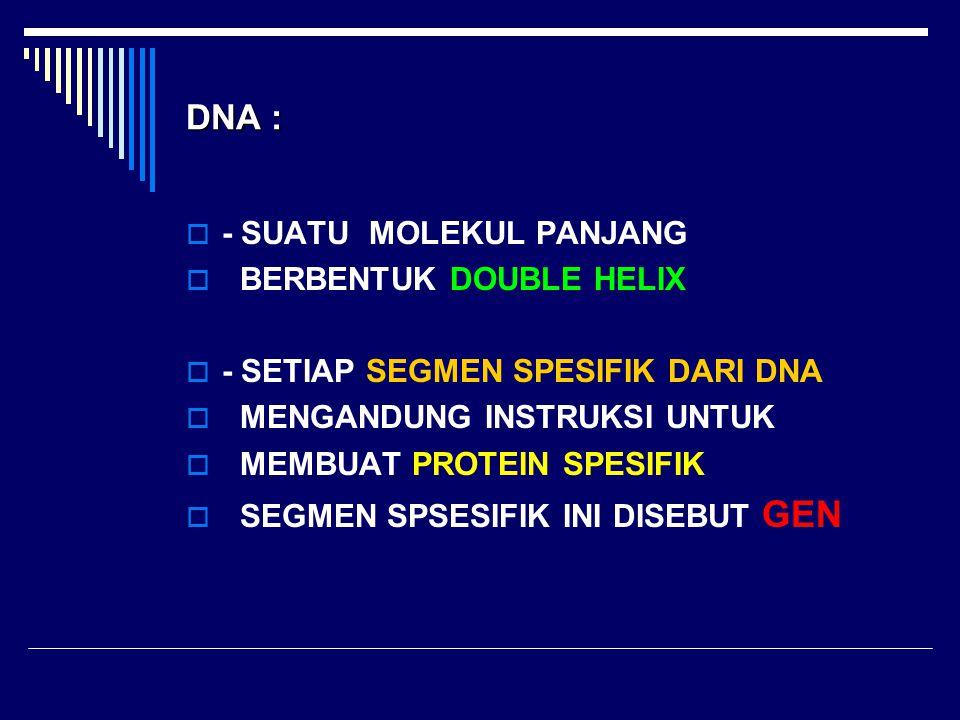 DNA :  - SUATU MOLEKUL PANJANG  BERBENTUK DOUBLE HELIX  - SETIAP SEGMEN SPESIFIK DARI DNA  MENGANDUNG INSTRUKSI UNTUK  MEMBUAT PROTEIN SPESIFIK 