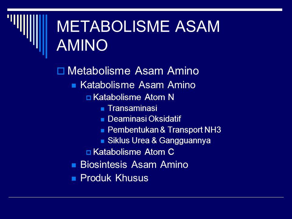  Metabolisme Asam Amino Katabolisme Asam Amino  Katabolisme Atom N Transaminasi Deaminasi Oksidatif Pembentukan & Transport NH3 Siklus Urea & Ganggu