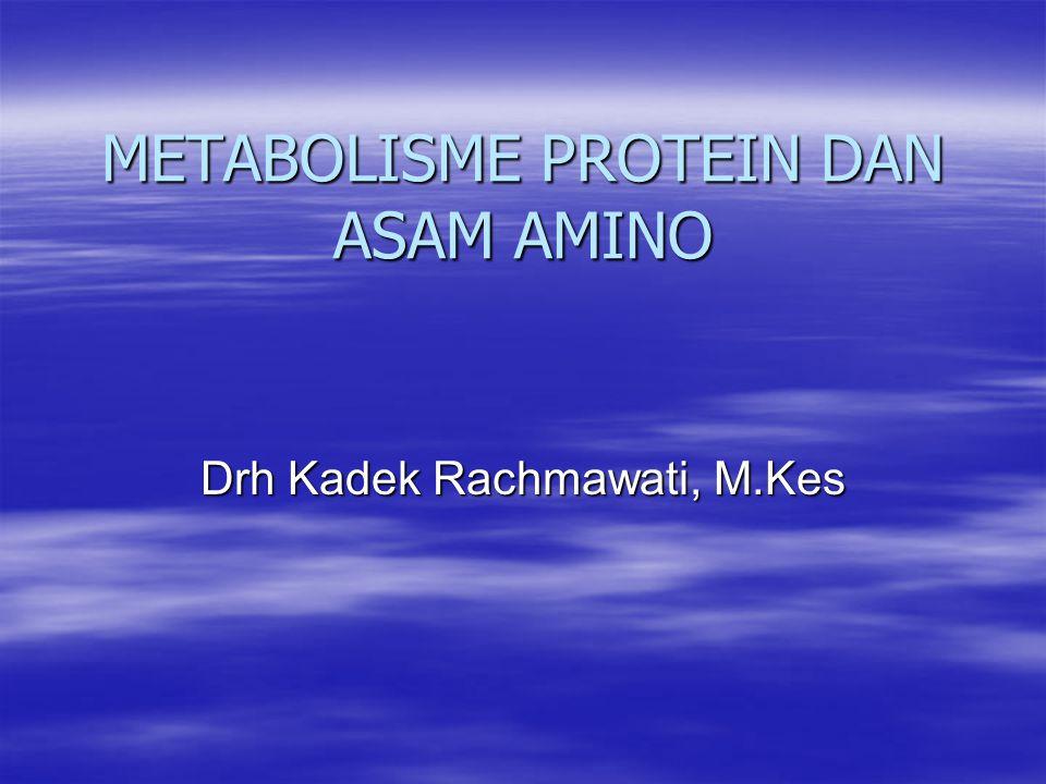 METABOLISME PROTEIN DAN ASAM AMINO Drh Kadek Rachmawati, M.Kes