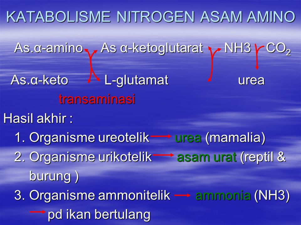 KATABOLISME NITROGEN ASAM AMINO As.α-amino As α-ketoglutarat NH3 CO 2 As.α-amino As α-ketoglutarat NH3 CO 2 As.α-keto L-glutamat urea As.α-keto L-glut