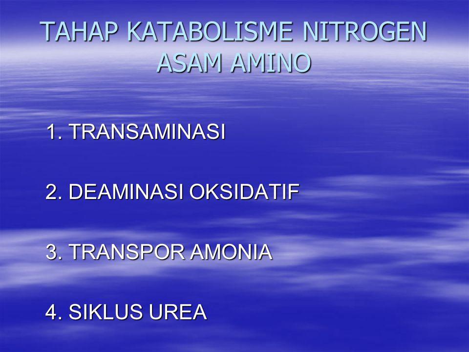 TAHAP KATABOLISME NITROGEN ASAM AMINO 1. TRANSAMINASI 1. TRANSAMINASI 2. DEAMINASI OKSIDATIF 2. DEAMINASI OKSIDATIF 3. TRANSPOR AMONIA 3. TRANSPOR AMO