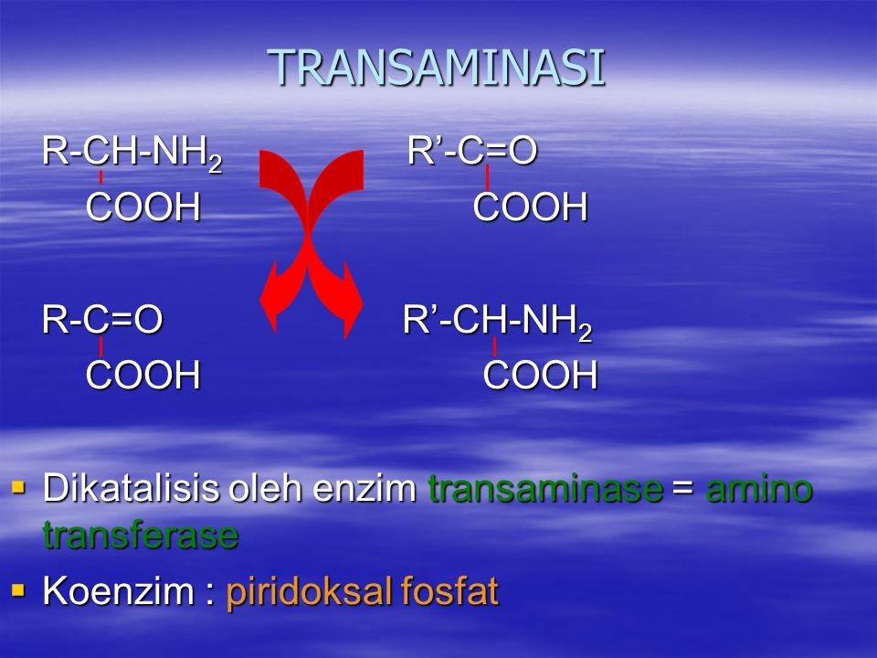 TRANSAMINASI R-CH-NH 2 R'-C=O R-CH-NH 2 R'-C=O COOH COOH COOH COOH R-C=O R'-CH-NH 2 R-C=O R'-CH-NH 2 COOH COOH COOH COOH  Dikatalisis oleh enzim transaminase = amino transferase  Koenzim : piridoksal fosfat