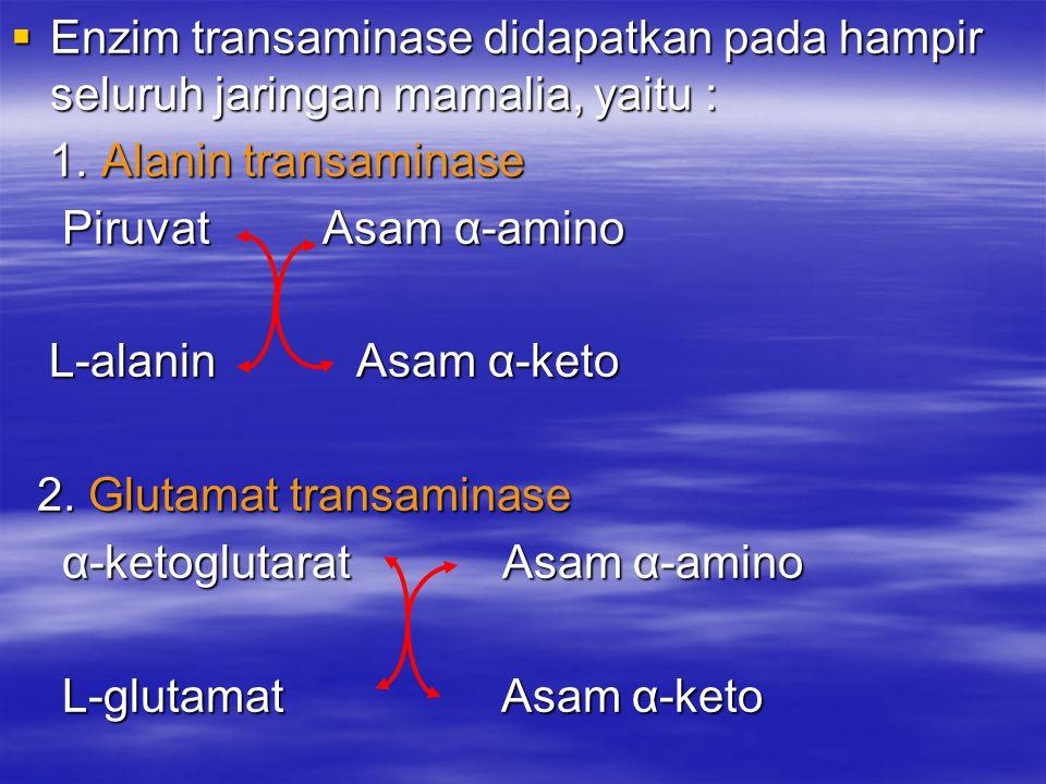 Enzim transaminase didapatkan pada hampir seluruh jaringan mamalia, yaitu : 1. Alanin transaminase 1. Alanin transaminase Piruvat Asam α-amino Piruv