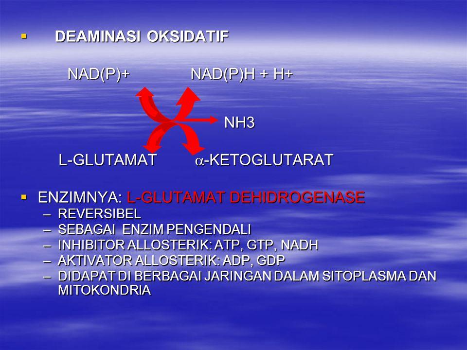  DEAMINASI OKSIDATIF NAD(P)+ NAD(P)H + H+ NAD(P)+ NAD(P)H + H+ NH3 NH3 L-GLUTAMAT  -KETOGLUTARAT L-GLUTAMAT  -KETOGLUTARAT  ENZIMNYA: L-GLUTAMAT D