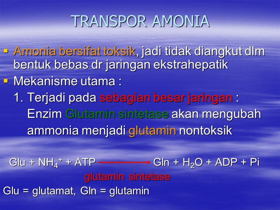 TRANSPOR AMONIA  Amonia bersifat toksik, jadi tidak diangkut dlm bentuk bebas dr jaringan ekstrahepatik  Mekanisme utama : 1. Terjadi pada sebagian