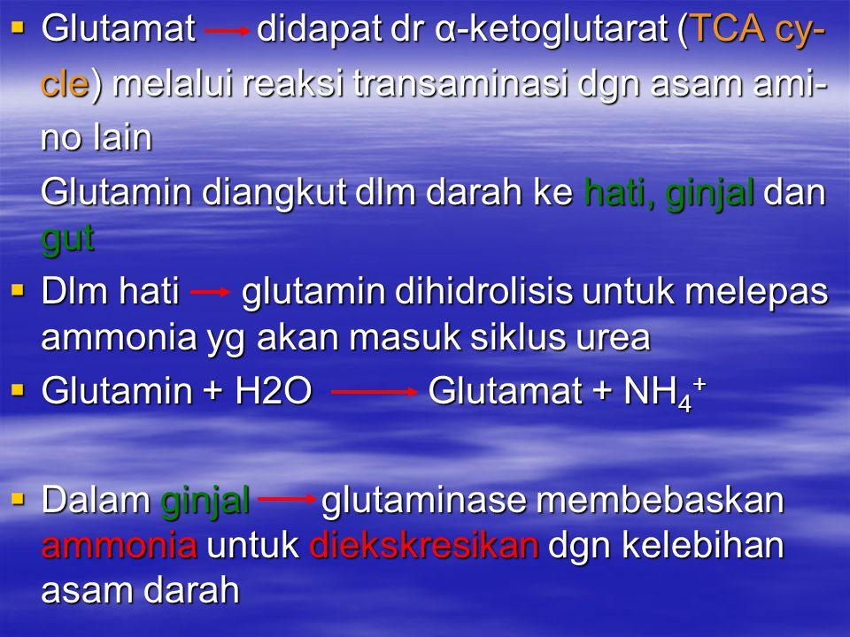  Glutamat didapat dr α-ketoglutarat (TCA cy- cle) melalui reaksi transaminasi dgn asam ami- cle) melalui reaksi transaminasi dgn asam ami- no lain no lain Glutamin diangkut dlm darah ke hati, ginjal dan gut Glutamin diangkut dlm darah ke hati, ginjal dan gut  Dlm hati glutamin dihidrolisis untuk melepas ammonia yg akan masuk siklus urea  Glutamin + H2O Glutamat + NH 4 +  Dalam ginjal glutaminase membebaskan ammonia untuk diekskresikan dgn kelebihan asam darah