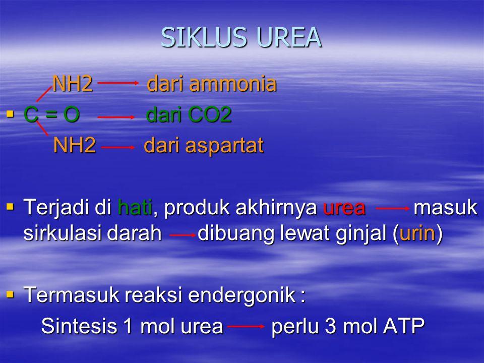 SIKLUS UREA NH2 dari ammonia NH2 dari ammonia  C = O dari CO2 NH2 dari aspartat NH2 dari aspartat  Terjadi di hati, produk akhirnya urea masuk sirkulasi darah dibuang lewat ginjal (urin)  Termasuk reaksi endergonik : Sintesis 1 mol urea perlu 3 mol ATP Sintesis 1 mol urea perlu 3 mol ATP