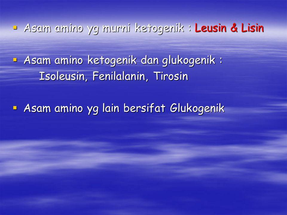  Asam amino yg murni ketogenik : Leusin & Lisin  Asam amino ketogenik dan glukogenik : Isoleusin, Fenilalanin, Tirosin Isoleusin, Fenilalanin, Tiros
