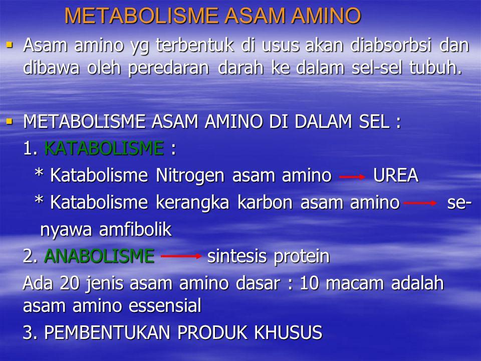 ASAM AMINO ASAM AMINO PROTEIN N PRODUK KHUSUS PROTEIN N PRODUK KHUSUS UREA KERANGKA C UREA KERANGKA C SENYAWA AMFIBOLIK SENYAWA AMFIBOLIK ENERGI BIOSINTESIS MENJADI ENERGI BIOSINTESIS MENJADI SENYAWA LAIN SENYAWA LAIN  Apabila asam amino dr makanan berlebihan (melebi- hi kebutuhan tubuh untuk sintesis protein, produk khu hi kebutuhan tubuh untuk sintesis protein, produk khu sus dll.) maka kelebihan/sisanya tak dapat ditim sus dll.) maka kelebihan/sisanya tak dapat ditim bun diubah menjadi lemak sebagai cadangan ka- bun diubah menjadi lemak sebagai cadangan ka- lori tubuh lori tubuh