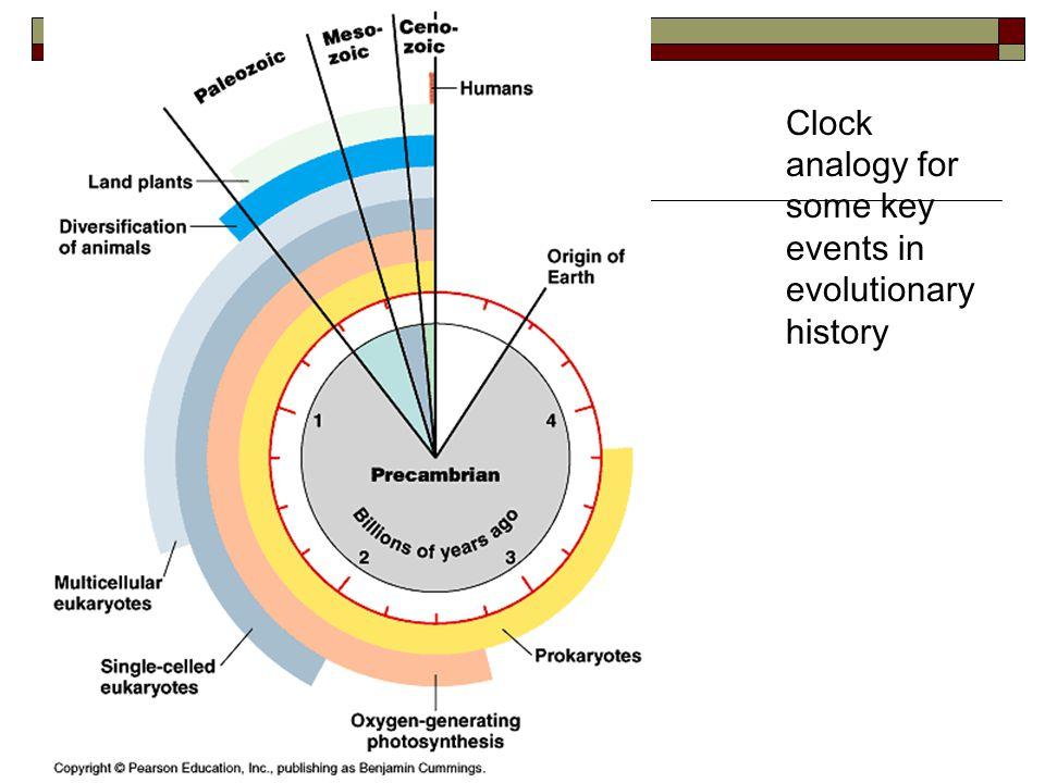 Endosymbiosis theory (Lynn Margulis, 1970's)